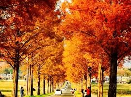 靠近京都,避開人潮的紅葉秘境:琵琶湖