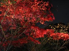 京都高台寺紅葉風情集錦