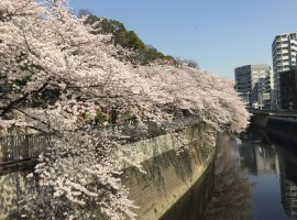 【2016年度】步步之旅:春來花見會(東京場)