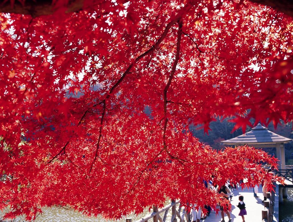 圖片來源:http://okazaki-kanko.jp