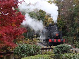【愛知】犬山幽情—文化保存的心力:從庭園有樂苑到明治村博物館