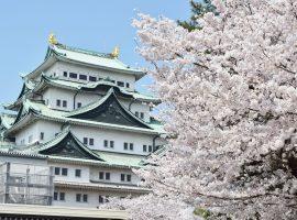 【名古屋/必買】櫻花季節來到!帶著洋溢櫻花風情的選物去賞櫻!