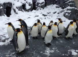 《企鵝鐵道失物招領課》一間藏有企鵝的日本車站?不願忘記的、不想記住的,他們都為你悉心保管