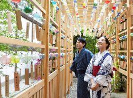 【關東必去】川越冰川神社夏日結緣風鈴祭,讓色彩繽紛的風鈴迴廊傳達心願