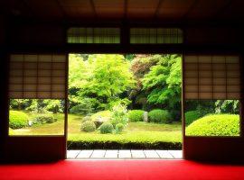 【京都】35歲的她放棄一切,跨海挑戰一個保守排外、男性主導的園藝修剪行業!